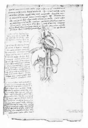 Leonardos Anatomical Drawings