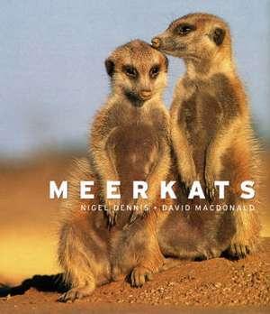 Meerkats imagine