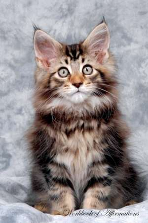 Maine Coon Kitten Workbook of Affirmations Maine Coon Kitten Workbook of Affirmations de Alan Haynes