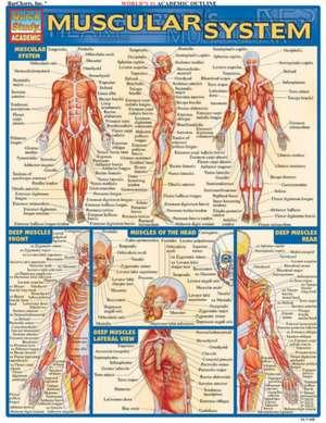 Muscular System Laminate Reference Chart de Rich Marino