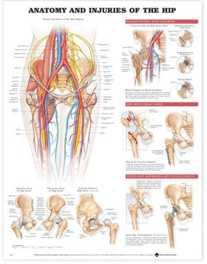 Anatomy and Injuries of the Hip Anatomical Chart