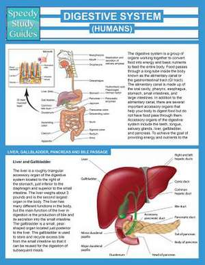 Digestive System (Humans) (Speedy Study Guide)