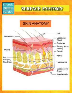 Surface Anatomy (Speedy Study Guides)