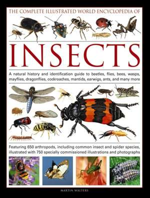 Complete Illustrated World Encyclopedia of Insects de Martin Walters