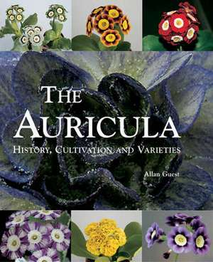 The Auricula