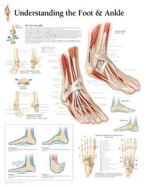 Understanding the Foot & Ankle Chart: Wall Chart
