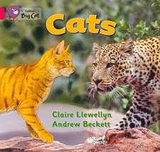 Cats Workbook