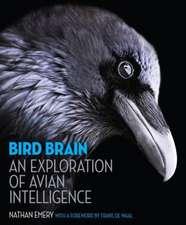 Bird Brain – An Exploration of Avian Intelligence