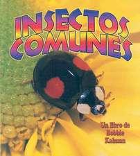 Insectos Comunes