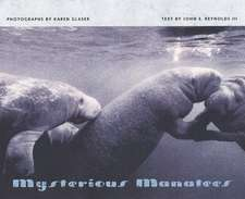 Mysterious Manatees