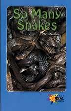 So Many Snakes