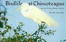 Birdlife at Chincoteague & the Virginia Barrier Islands