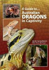 Guide To Australian Dragons In Captivity