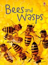 Maclaine, J: Bees and Wasps