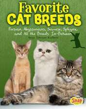 Favorite Cat Breeds:  Persians, Abyssinians, Siamese, Sphynx, and All the Breeds In-Between