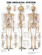 Skeletal System - Large Decal Chart