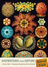 Cards to Color:  Featuring the Illustrations of Ernst Haeckel