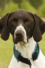 The German Shorthaired Pointer Dog Journal