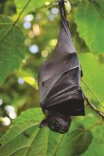 Vampire Bat Journal