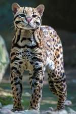 Ocelot Any Day Planner Notebook