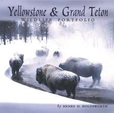 Yellowstone & Grand Teton Wildlife