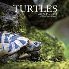 Turtles Calendar 2019: 16 Month Calendar