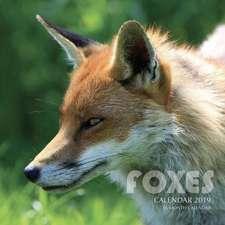 Foxes Calendar 2019: 16 Month Calendar