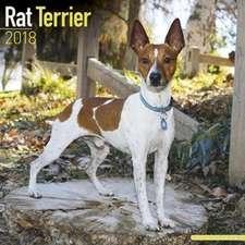 Rat Terrier Calendar 2018