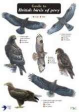 Guide to British Birds of Prey