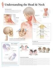 Understanding the Head & Neck Wall Chart:  8650