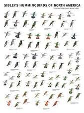 Sibley's Hummingbirds of North America