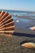 Beach Shells Notebook